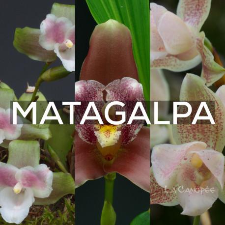 Ma collection 'Matagalpa'