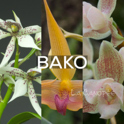 Ma collection 'Bako'