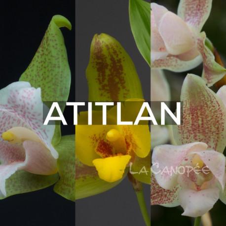 Ma collection 'Atitlan'