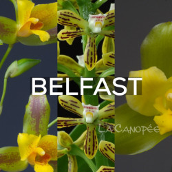 Ma collection 'Belfast'