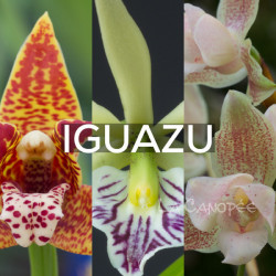 Ma collection 'Iguazu'