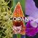 Ma collection 'Copan'
