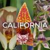 Ma collection 'California'