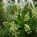 Toutes nos plantes