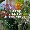 Les plantes hors catalogue